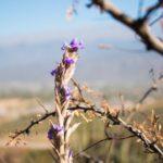 El Regreso a la Libertad de la mano de EcoCatamarca
